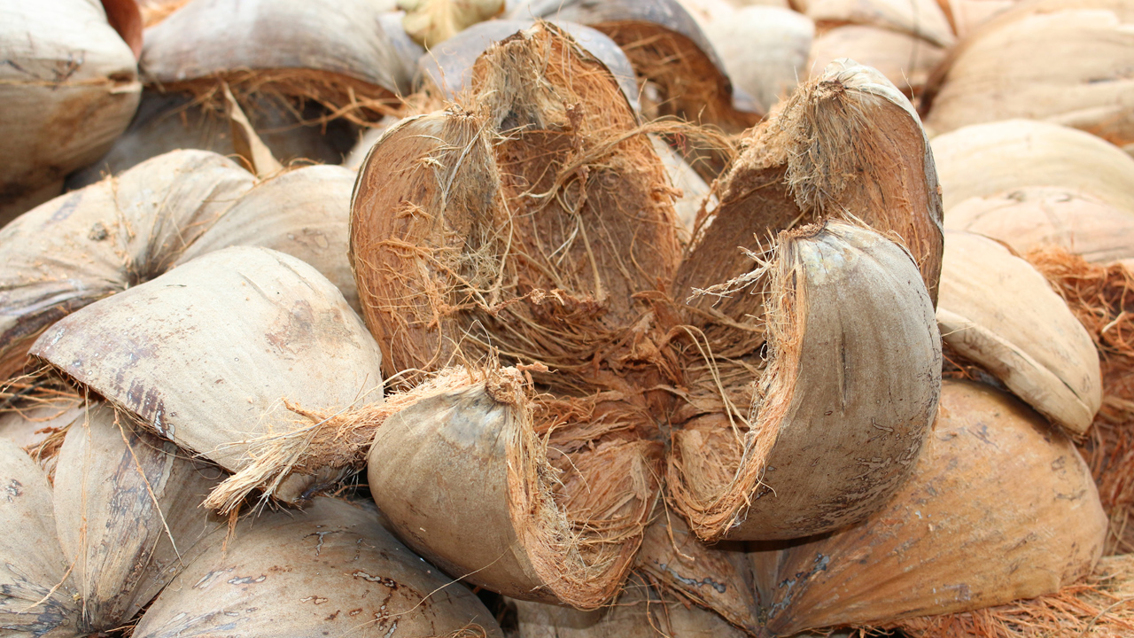 Ghanaian company turning coconut husk into usable products